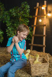 A little boy plays with a little goslings in farm Stock Images