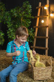 A little boy plays and smiles with a goslings in farm Stock Image