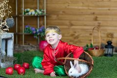 Little boy plays with white Easter Bunny. on the green grass and baby bunnies, Spring Festival and birth. Living Easter rabbits royalty free stock photo