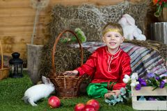 Little boy plays with white Easter Bunny. on the green grass and baby bunnies, Spring Festival and birth. Living Easter rabbits royalty free stock photography