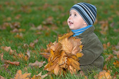 Little boy plays with yellow leaves Royalty Free Stock Photo
