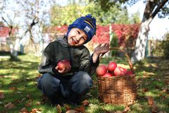 Little boy posing outdoors with apples Stock Image