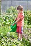 Little boy pour in garden Royalty Free Stock Image