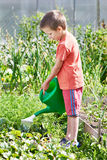 Little boy pour in garden Stock Photos