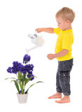 Little boy pouring on flower Royalty Free Stock Photos