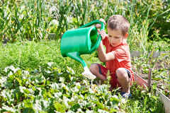 Little boy pours garden Stock Photo