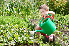 Little boy pours vegetable garden Royalty Free Stock Images