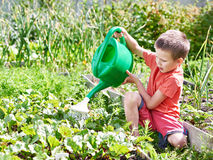 Little Boy Pours Vegetable Garden. Little Boy Watering In The Vegetable  Garden Stock Image