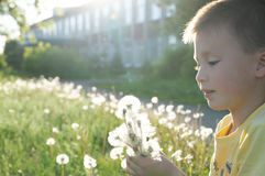 Little boy profile blowing dandelion flower at summer. Happy smiling child enjoying nature in park Royalty Free Stock Photos