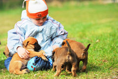 Little boy with  puppies Royalty Free Stock Image