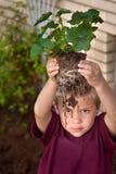 Little Boy que mira a través de raíces de la planta Fotografía de archivo