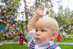 Little boy raising his hand up Stock Photography