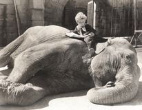 Little boy reading a book on sleeping elephant Stock Image