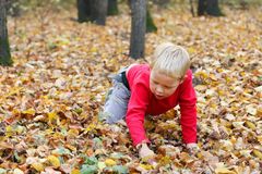 Little boy in red crawls on dry leaves Stock Images