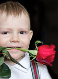 Little boy with red rose. Little boy holds a red rose in teeth, the small macho, is  the black Royalty Free Stock Photography