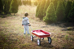 Little boy with red wagon. In pine wood. The child chooses a Christmas tree stock photo