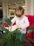 Little boy in restaurant Stock Photo