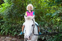 Child riding horse. Kids ride pony. Little boy riding horse on summer vacation in country ranch. Kids learn to ride horses. Children and animals friendship stock photography