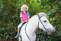 Child riding horse. Kids ride pony. Little boy riding horse on summer vacation in country ranch. Kids learn to ride horses. Children and animals friendship stock photos