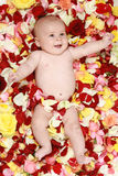 Little boy in rose petals. Portrait of young little boy in rose-petals stock images