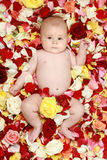 Little boy in rose-petals. Portrait of young little baby boy in rose petals stock photography