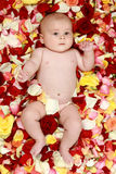 Little boy in rose-petals. Beautiful baby boy in a rose plants stock images