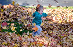 Little boy running through blowing leaves royalty free stock images