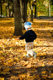 Little boy running through the orange foliage Stock Image