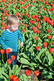 Little boy running on tulips fields Stock Image