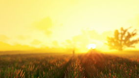 Little boy running on wheat grass crop, old windmill in the background at sunrise, sunny mist stock footage