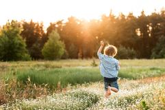 Little boy runs along the daisy to the forest. At sunset stock image