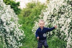 Little boy runs happily in park between spirea bushes. stock images