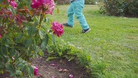 Little boy runs near the rose bush. Slow motion. Little boy near the rose bush stock footage