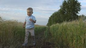 Boy runs through a wheat field, happy childhood stock footage