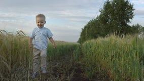 Boy runs through a wheat field, happy childhood Royalty Free Stock Photo