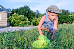 Little boy searching in the grass for insects Stock Photo
