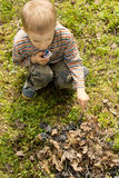 Little boy setting alight to twigs and leaves. Little boy setting alight to a pile of twigs and leaves with a match as he tries to start a fire on a grassy Stock Image