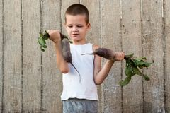 The little boy shows off a beet that he helped grow his mother in the garden. The concept of environmentally friendly rural settle. Ments and organic products Royalty Free Stock Photography