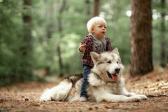 Little boy sits astride malamute dog on walk in forest. Close up. Little boy sits astride malamute dog on walk in forest. Dog lies on forest road. Close up Royalty Free Stock Images