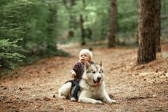 Little boy sits astride malamute dog on walk in forest. Dog lies on forest road Stock Photos