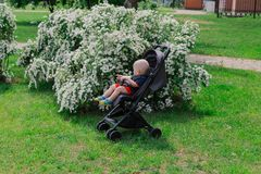 A little boy sits in a baby carriage by a beautiful bush on a sunny day. royalty free stock photo