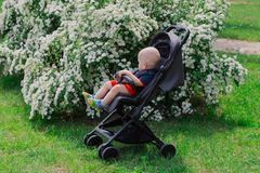 A little boy sits in a baby carriage by a beautiful bush on a sunny day. stock photo