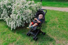 A little boy sits in a baby carriage by a beautiful bush on a sunny day. royalty free stock photos