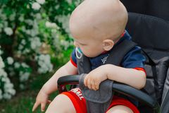 A little boy sits in a baby carriage by a beautiful bush on a sunny day. stock image