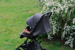 A little boy sits in a baby carriage by a beautiful bush on a sunny day. royalty free stock photography