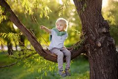Little boy sits on a branch of a big tree and points with his finger. Child`s games. Active family time on nature. Hiking with. Little boy sits on a branch of a stock photo