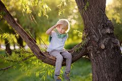 Little boy sits on a branch of tree and looks into the distance. Child`s games. Active family time on nature. Hiking with little. Little boy sits on a branch of royalty free stock photo