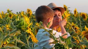 A little boy sits on his mother`s hands and sniffs a sunflower flower in the field. Happy family. Slow motion stock footage
