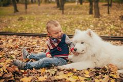 Little boy sits next to samoyed dog and plays with him in autumn royalty free stock photos