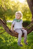 Little boy is sitting on a branch of tree and is dreaming. Child`s games. Active family time on nature. Hiking with little kids. Little boy is sitting on a stock images